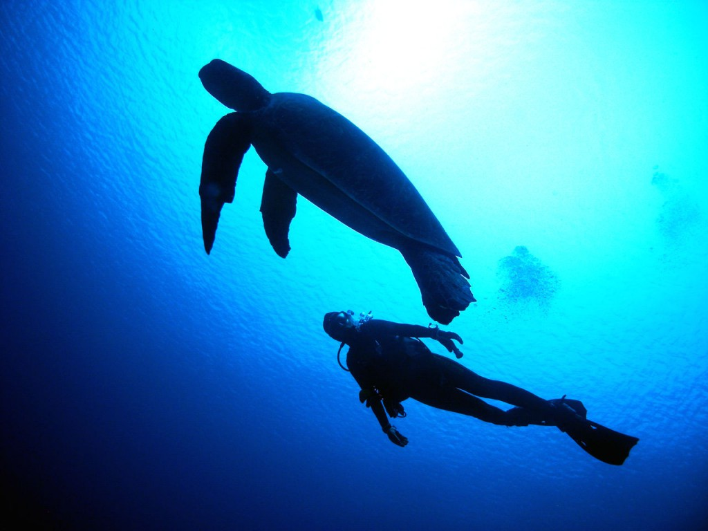 Amazing Underwater Experience, Scuba diving!