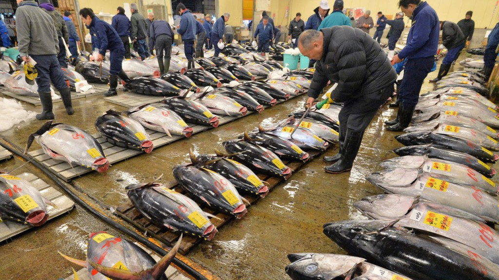 Be a Part of Tuna Auction in the World Largest Fish Market ~ Tsukiji Market