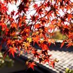京都秘藏赏枫红景点介绍