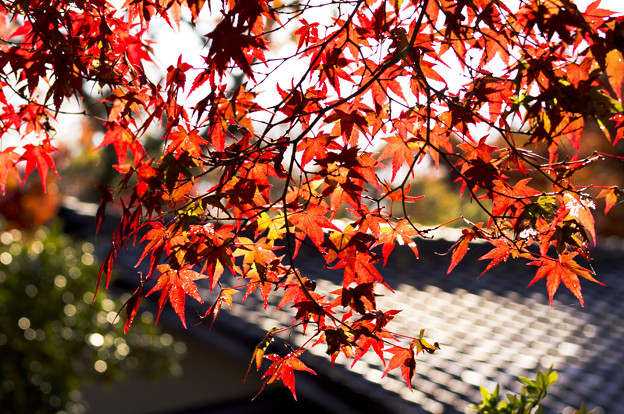 Best 5 Autumn Leaves Spots You Must Visit in Kyoto