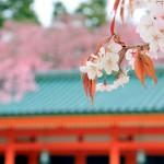 京都秘藏赏樱景点介绍(神社,寺庙篇)