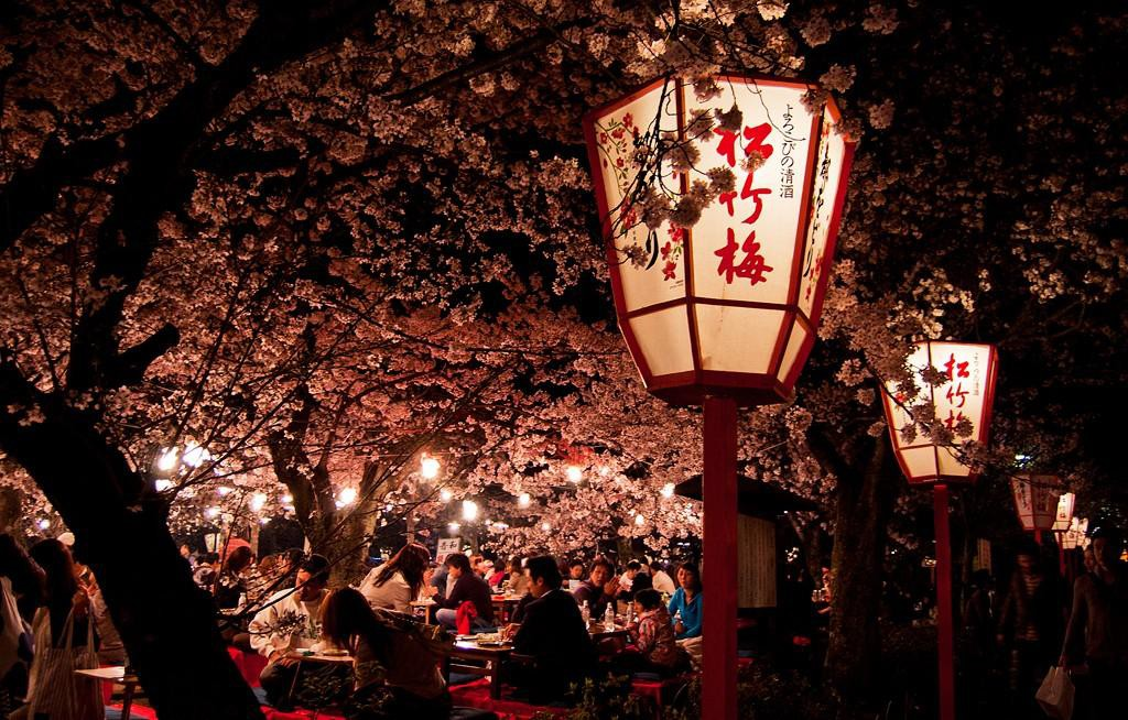 Best 5 Cherry Blossoms Spots in Kyoto (Park & Walkway)